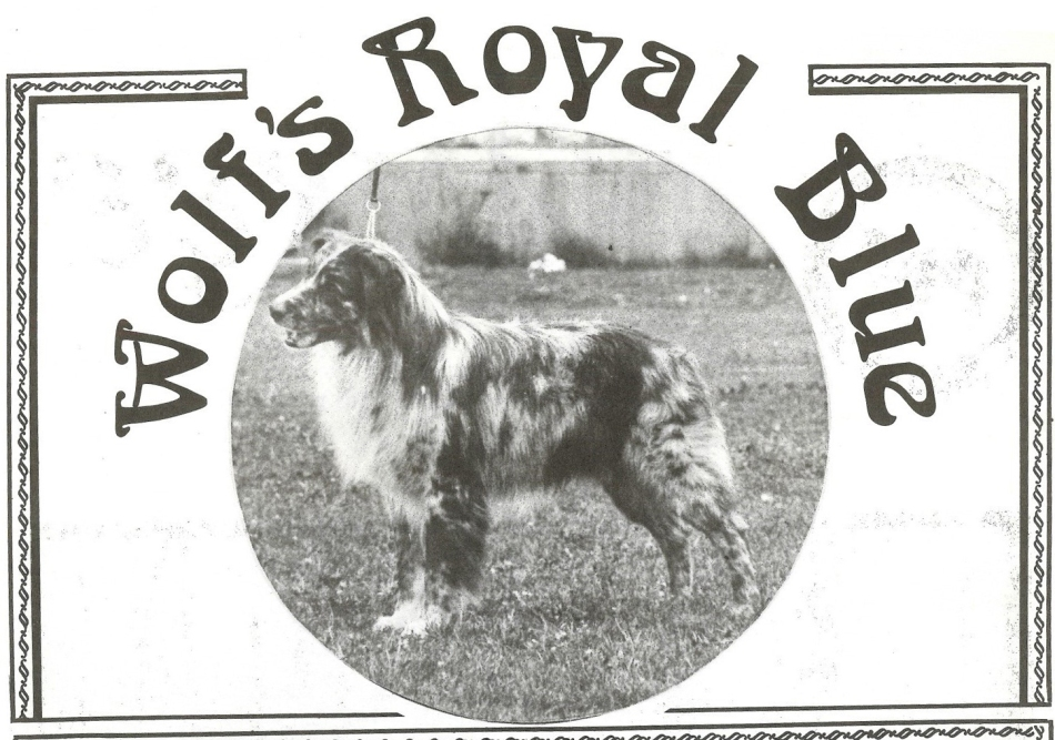 77 Wolf_s Royal Blue