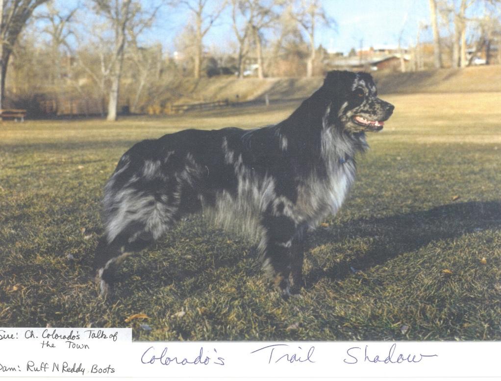 Colorados Trail Shadow
