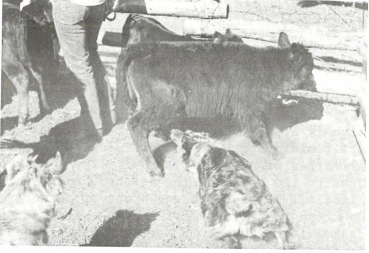 NSD 1972 pg 16