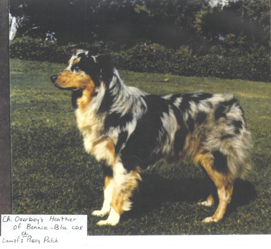 Overbeys Heather of Bonnie Blu