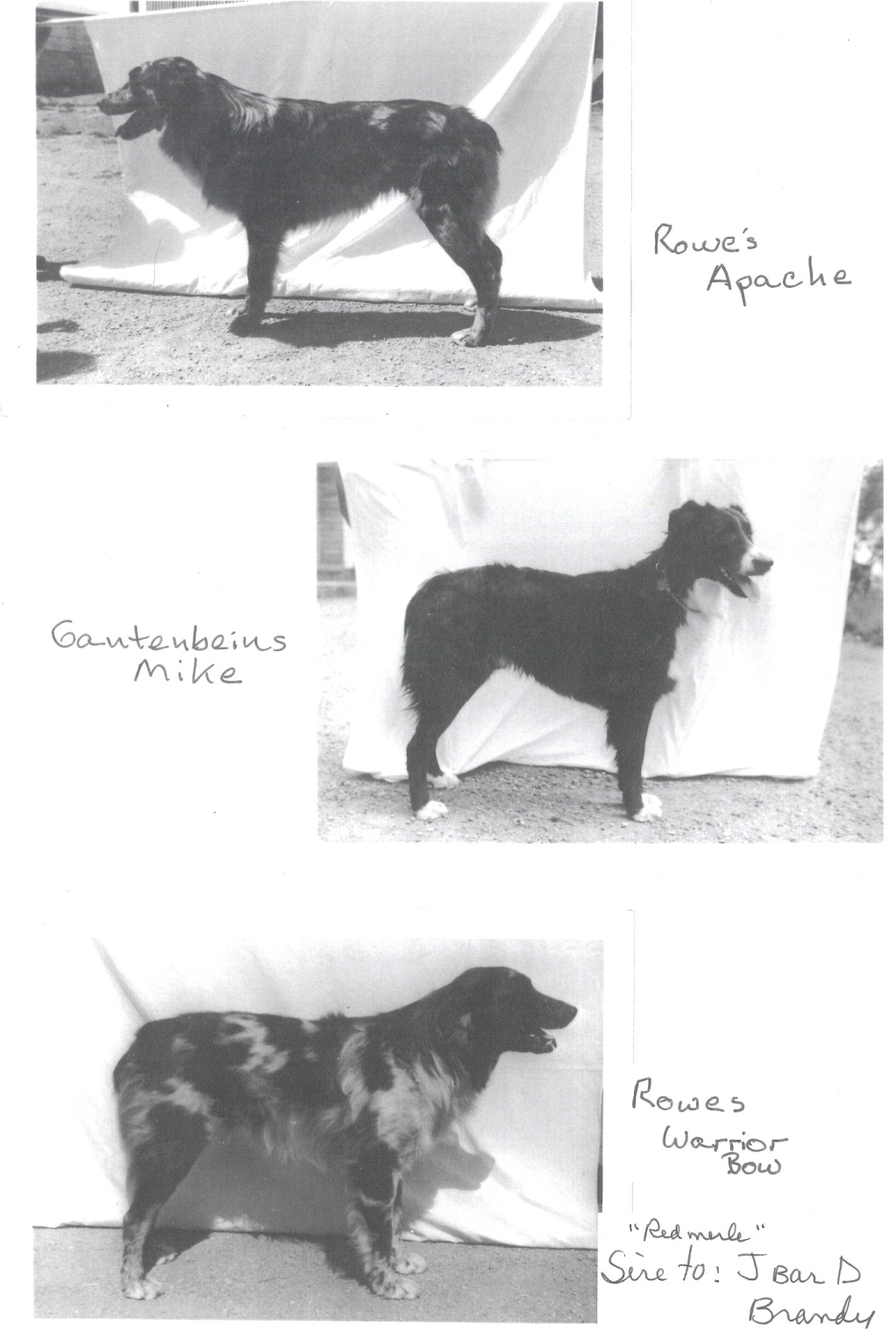Rowes dogs